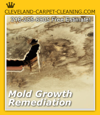 mold remediation Cleveland